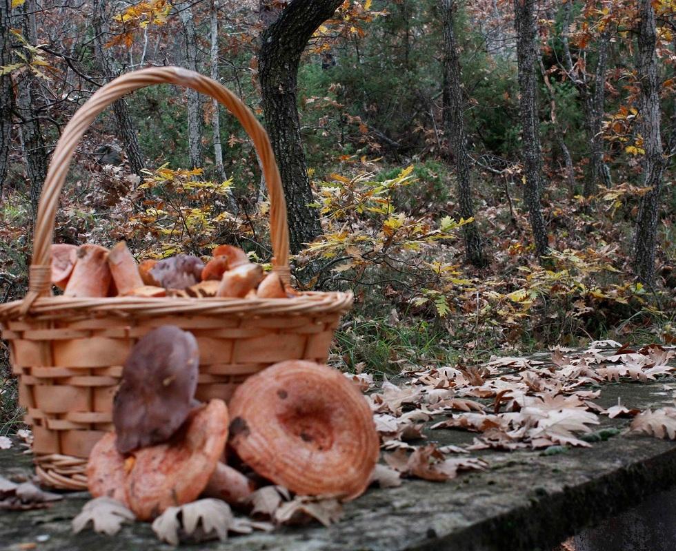Fotografías del otoño